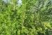 fillirea_giardino-botanico-di-san-salvo_1