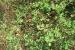 giardino-botanico-di-san-salvo_2