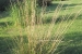 giardino-botanico-di-san-salvo_5_0