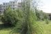 giardino-botanico-di-san-salvo_canna_di_ravenna