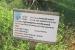 giardino-botanico-di-san-salvo_sparto_pungente_0