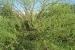 giardino-botanico-di-san-salvo_tamerice_di_torrente