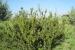 mirto-tarantino_giardino-botanico-di-san-salvo_0