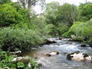 Flora e fauna del fiume Trigno