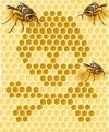 moria-delle-api-studio-italiano-conferma-legame-con-pesticidi-neonicotinoidi_2159