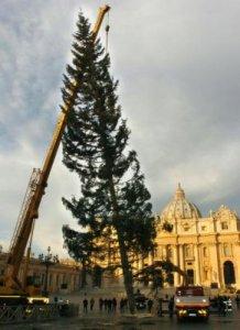 L'abete bianco di Pescopennataro trasportato a Roma, dicembre 2012