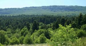Foresta degli Abeti Soprani, Pescopennataro (IS)