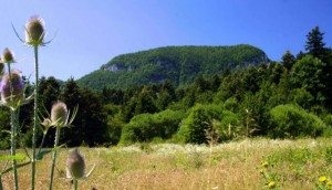 Foresta ad abete bianco in Molise
