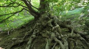 torrebuna bosco