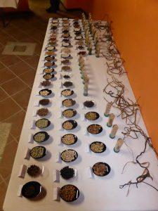 antichi-legumi-molisani