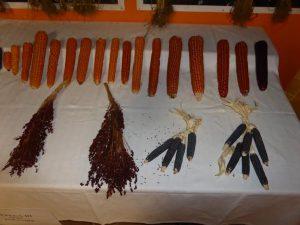 mostra antichi legumi molisani